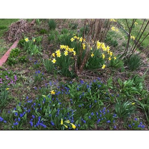 my little garden_f0134670_19314503.jpeg