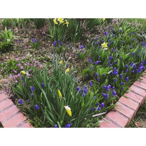 my little garden_f0134670_19351205.jpeg