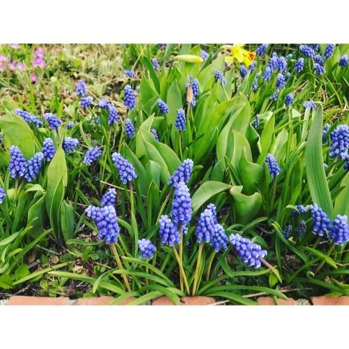 my little garden_f0134670_19360984.jpeg