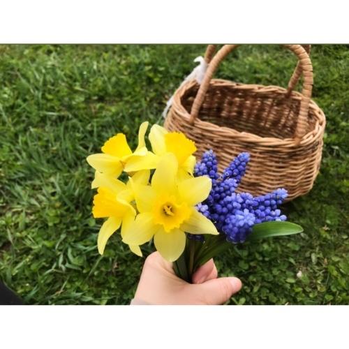 my little garden_f0134670_19363814.jpeg