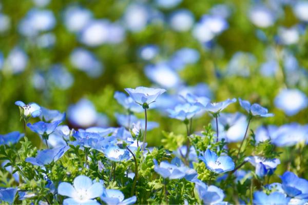 空と海とお花畑_d0253887_18384844.jpg