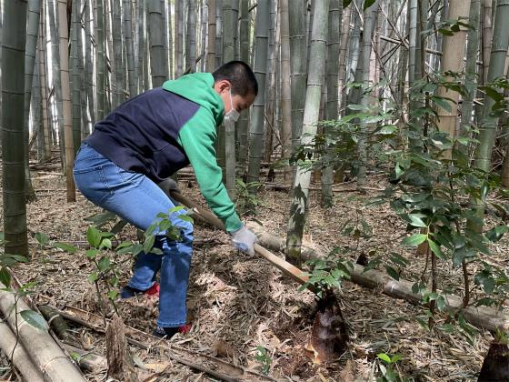 タケノコ掘り_a0210340_18395813.jpg