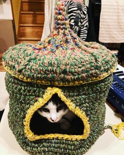 猫ちぐら!_c0331145_20030975.jpg