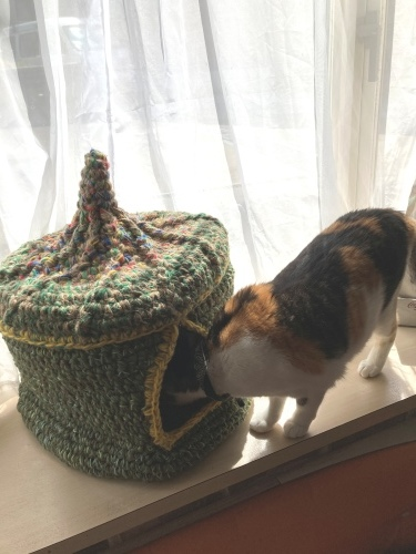 猫ちぐら!_c0331145_20091101.jpg