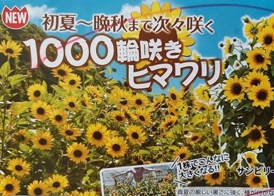 咲き終わったチューリップの再利用法♪_b0194861_10471125.jpg