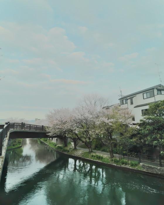 京都 桜 2021_f0021869_22440504.jpg
