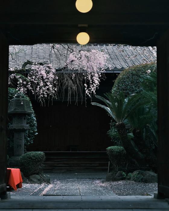 京都 桜 2021_f0021869_22440526.jpg