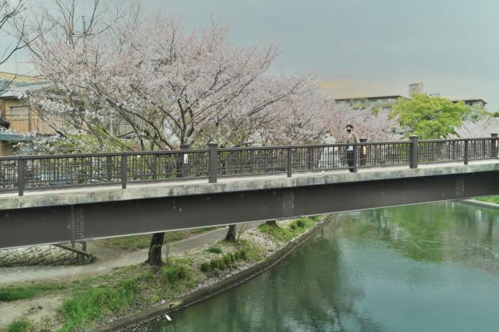 京都 桜 2021_f0021869_22463724.jpg