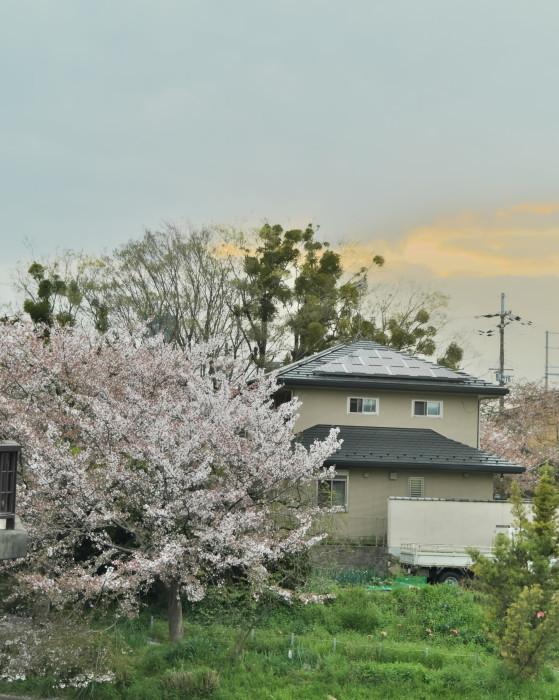 京都 桜 2021_f0021869_22463782.jpg