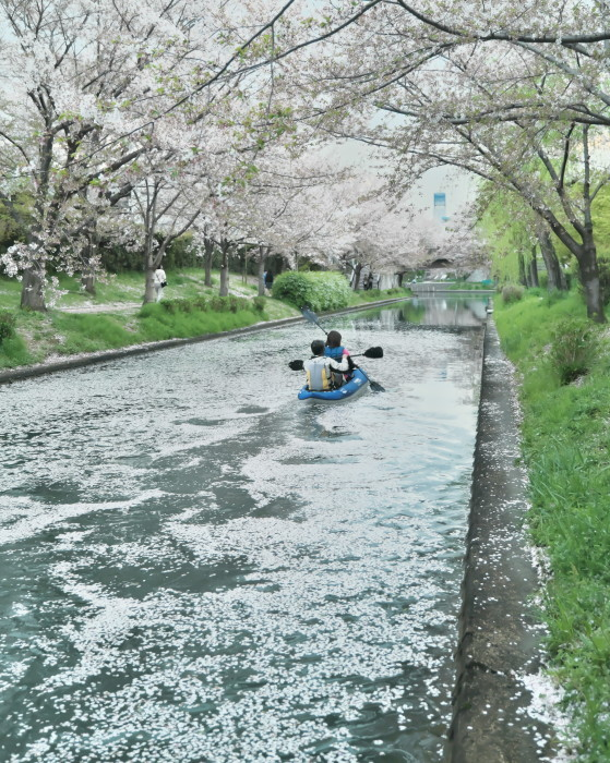 京都 桜 2021_f0021869_22481540.jpg