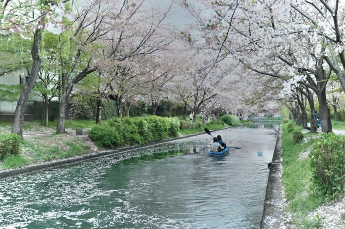 京都 桜 2021_f0021869_22481567.jpg