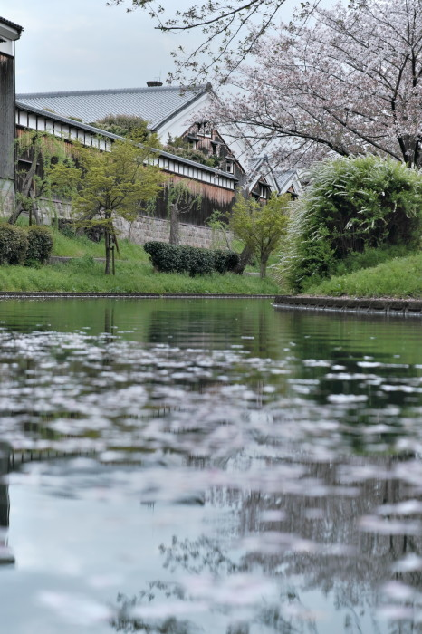 京都 桜 2021_f0021869_22481622.jpg
