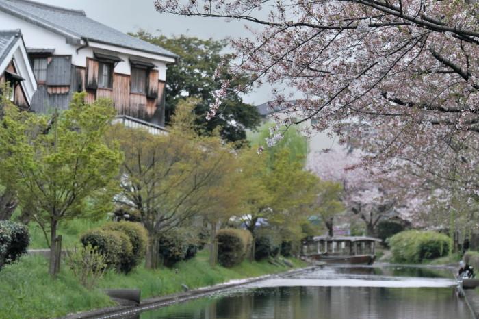 京都 桜 2021_f0021869_22494413.jpg