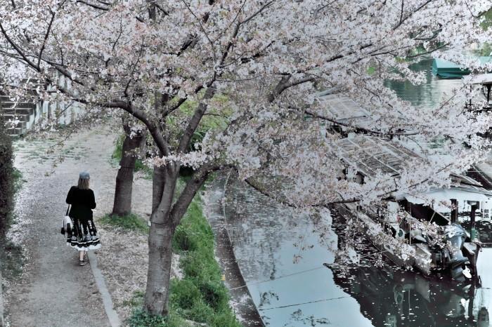 京都 桜 2021_f0021869_22494424.jpg