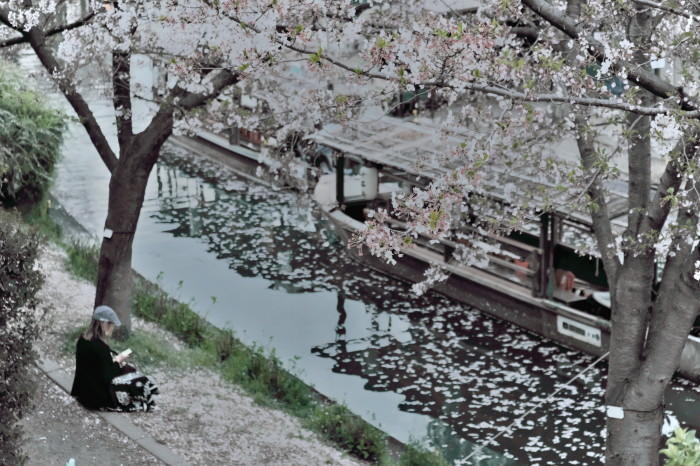 京都 桜 2021_f0021869_22511515.jpg