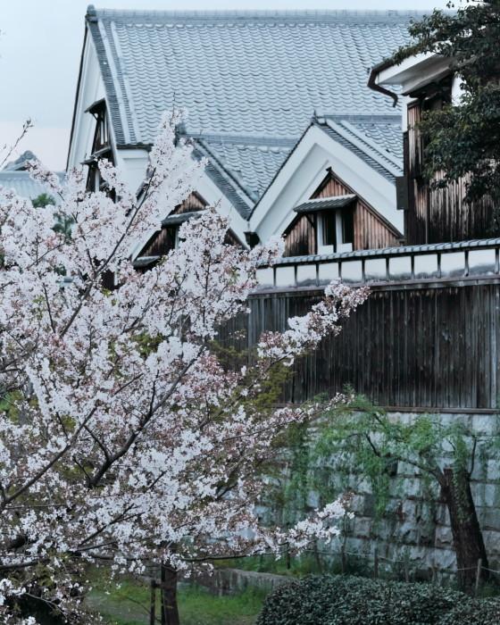 京都 桜 2021_f0021869_22511610.jpg