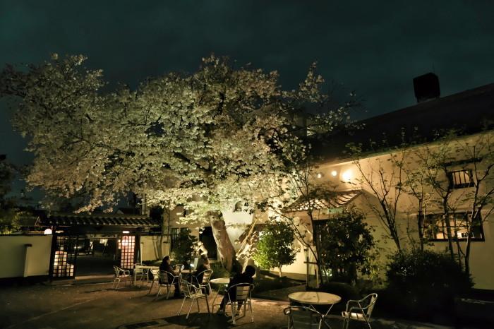 京都 桜 2021_f0021869_22524741.jpg