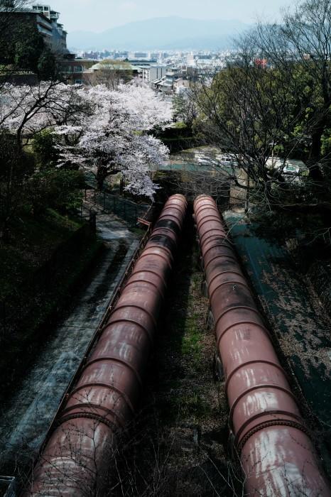 京都 桜 2021_f0021869_22593282.jpg