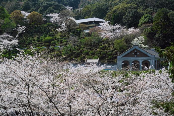 京都 桜 2021_f0021869_22593344.jpg
