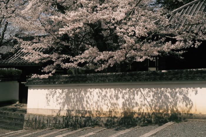京都 桜 2021_f0021869_23013950.jpg