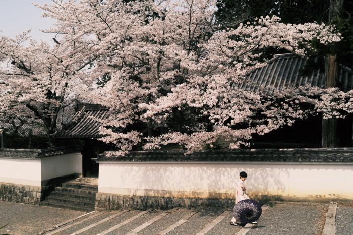 京都 桜 2021_f0021869_23014157.jpg
