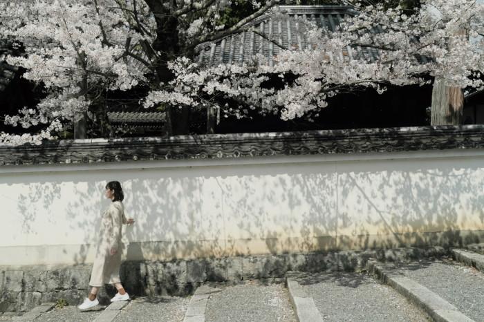京都 桜 2021_f0021869_23065892.jpg