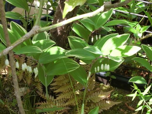 お庭の隅に咲く花_f0226671_10442481.jpg