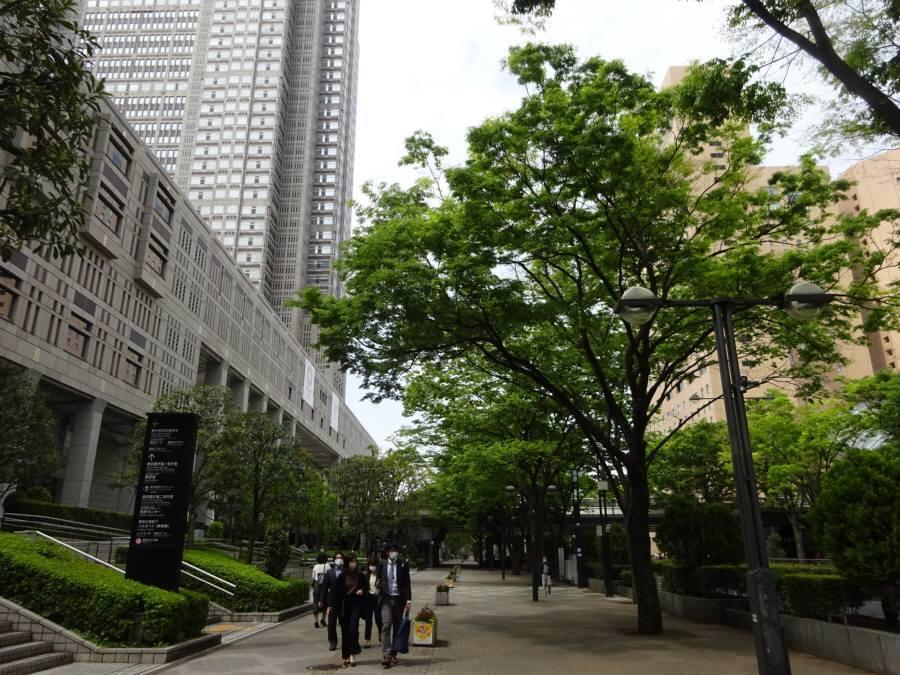 都議会棟西のケヤキ_f0059673_21494449.jpg