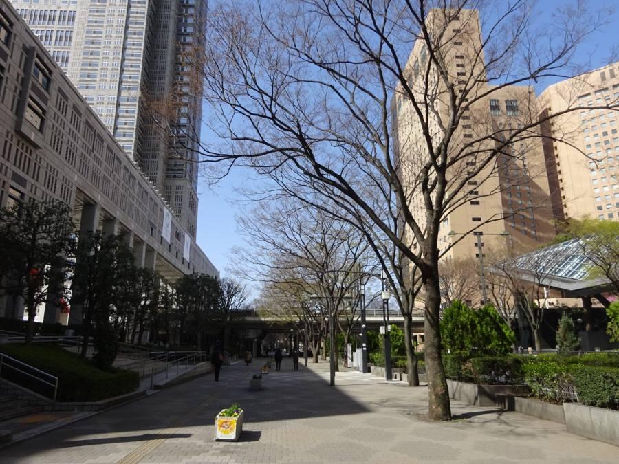 都議会棟西のケヤキ_f0059673_21501626.jpg