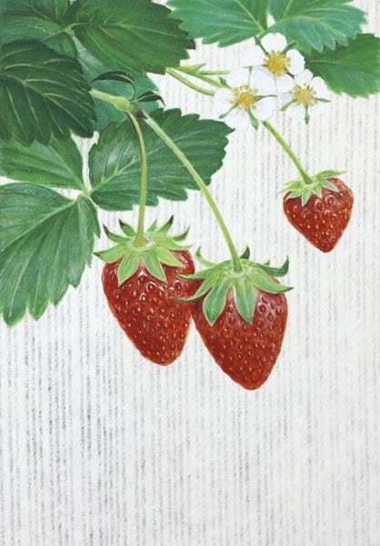 「苺」日本画 サムホール 岩絵の具、銀箔、  典具帖、雲肌麻紙_b0021594_02271646.jpg