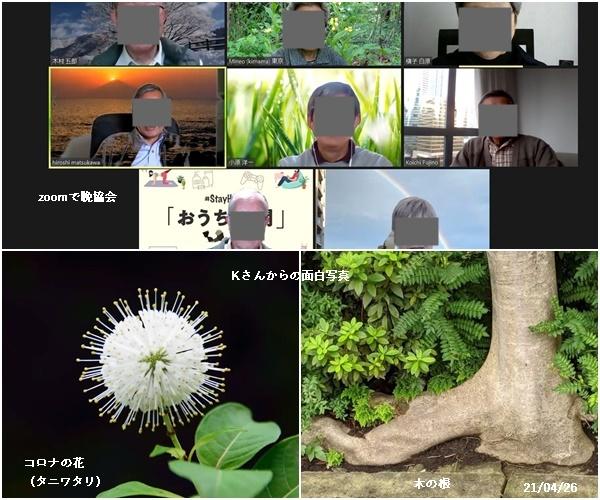 浅川クリーン作戦・キンランとギンラン・zoomで勉強会・ピンクムーン_c0051105_17065407.jpg