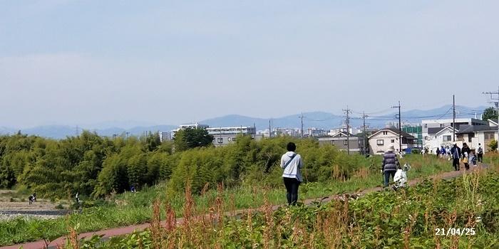 浅川クリーン作戦・キンランとギンラン・zoomで勉強会・ピンクムーン_c0051105_17272271.jpg