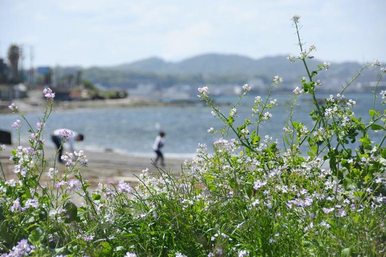 春色の走水_d0065116_20073005.jpg