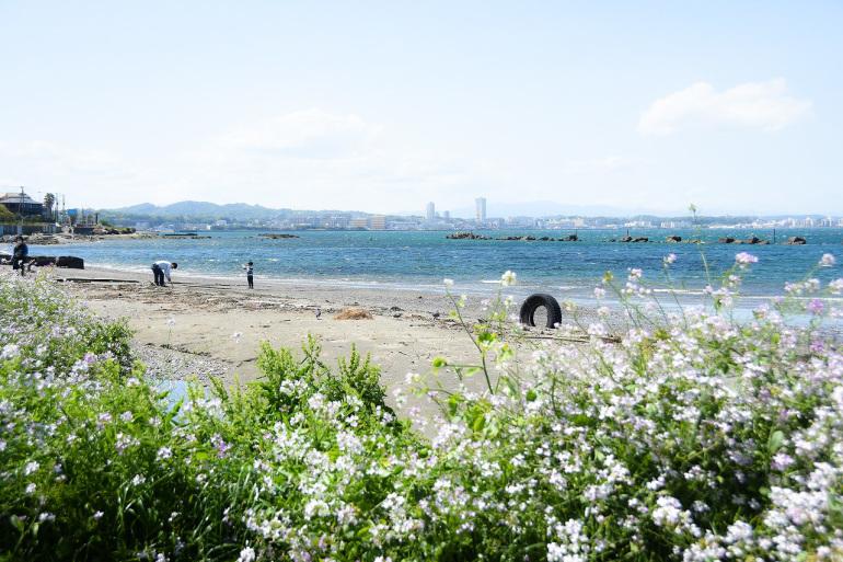 春色の走水_d0065116_20090837.jpg