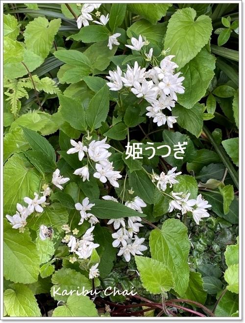この春…お初にお目にかかります~♪_c0079828_16400115.jpg
