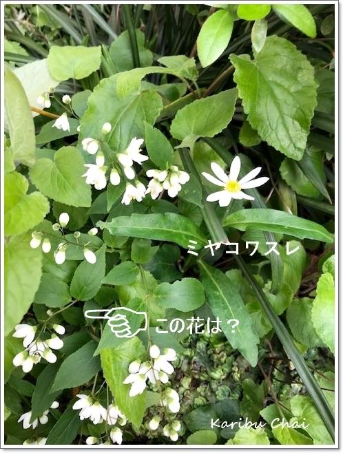 この春…お初にお目にかかります~♪_c0079828_16472278.jpg