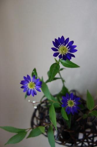 お庭のお花を楽しむ_a0197730_21040810.jpg