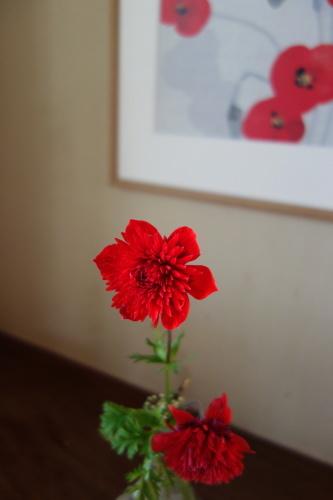 お庭のお花を楽しむ_a0197730_21484985.jpg