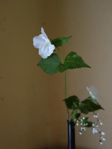 お庭のお花を楽しむ_a0197730_21561528.jpg