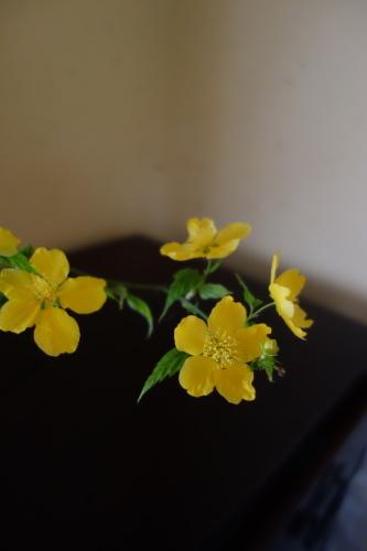 お庭のお花を楽しむ_a0197730_22025293.jpg