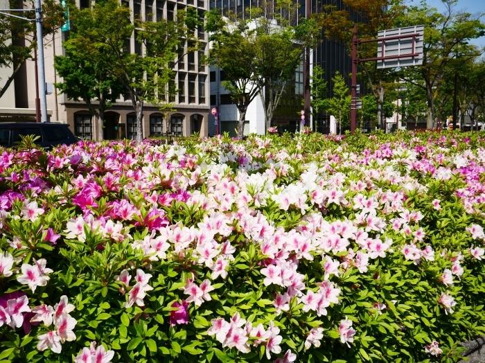 和歌山市は市の花ツツジが美しいです  2021-04-28 00:00_b0093754_23055957.jpg