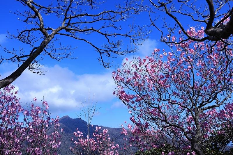 古祖母山 4月25日_e0405576_06043957.jpg