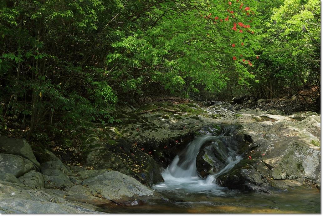 篠川の流れ_a0057905_14291832.jpg