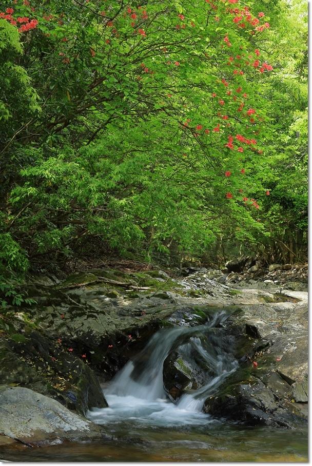篠川の流れ_a0057905_14292887.jpg
