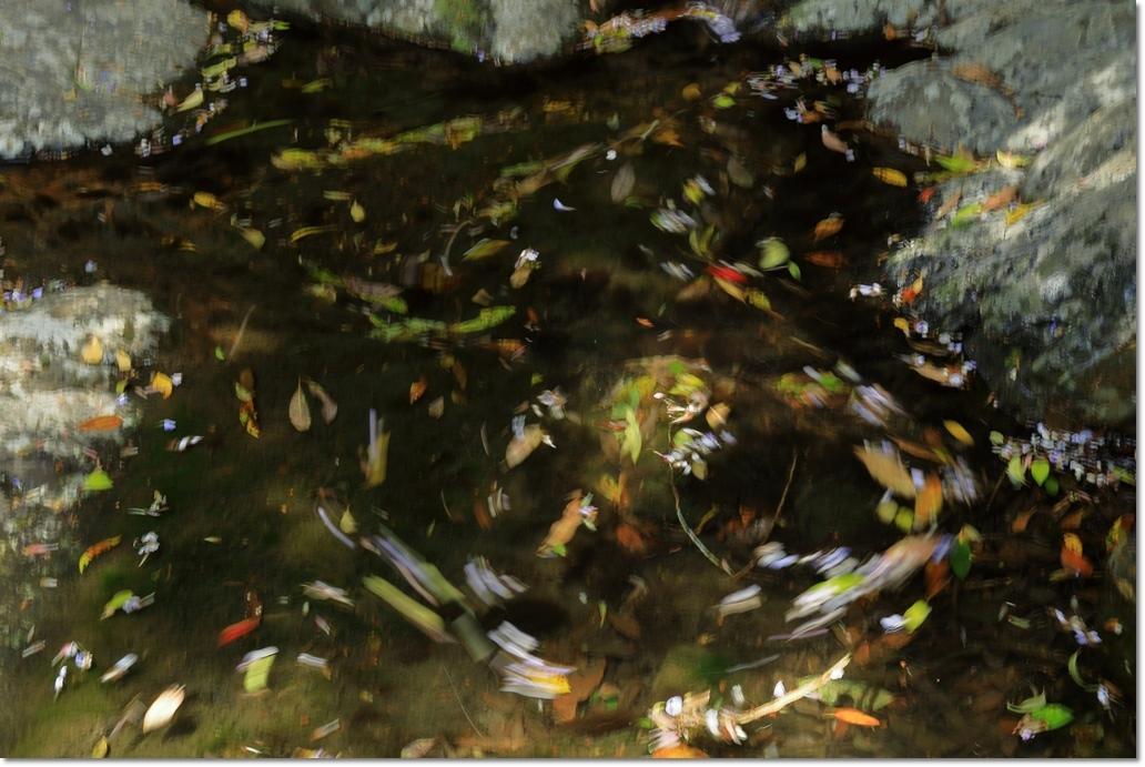 篠川の流れ_a0057905_14300393.jpg