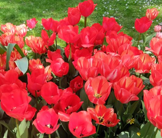 ウェスト・サイド・コミュニティ・ガーデンのチューリップ・フェスティバル_b0007805_02550862.jpg