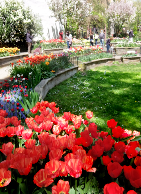 ウェスト・サイド・コミュニティ・ガーデンのチューリップ・フェスティバル_b0007805_02564360.jpg