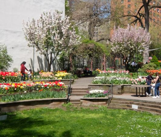 ウェスト・サイド・コミュニティ・ガーデンのチューリップ・フェスティバル_b0007805_02565420.jpg