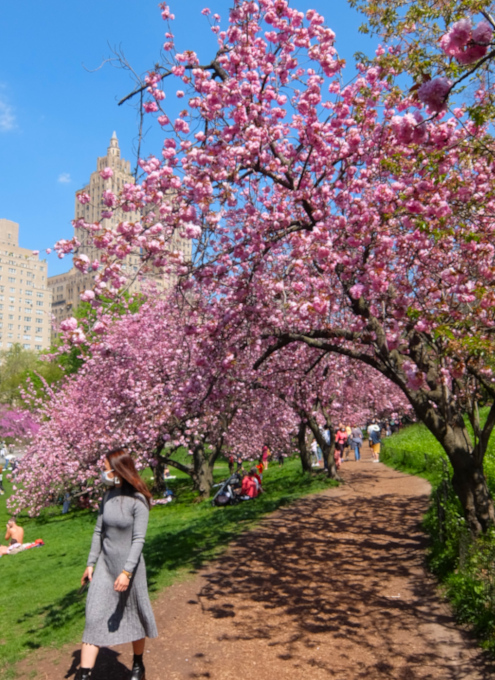咲き始めました、セントラルパークの桜のトンネル_b0007805_04473590.jpg