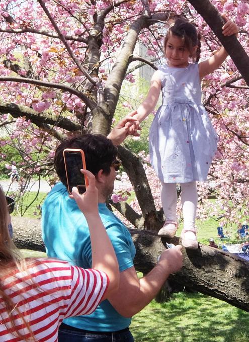 咲き始めました、セントラルパークの桜のトンネル_b0007805_04485699.jpg